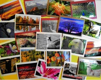 100 Nature Greeting Cards