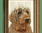 Goldendoodle dog beautifully upcycled vintage dictionary page book art print