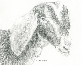 Original Pencil Sketch of a Goat - 4 x 6 Art for Sale