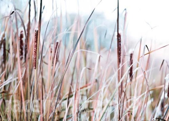 Nature Photography, Blue, Brown, Gold, Pastel, Rustic Wall Decor, Bulrushes, Cattails, Pastel Print