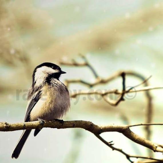 Bird Print, Chickadee, Cute bird photo, Blue, Brown, Nature Photography, Rustic, Bird Wall Art, Spring Woodland
