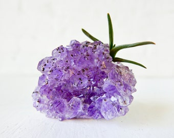 Amethyst Crystal Air Plant Garden - Shiny Druze Geode Purple Rock Stone -  Science Mineral Geology - Gardener Naturalist