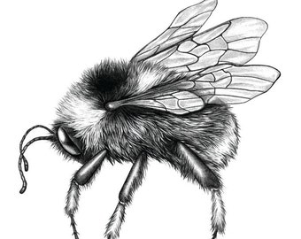 A Silver Liquor Only Now Remains - Left Bee - Limited edition print