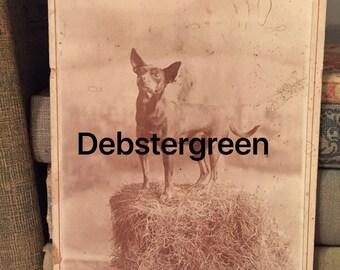 Antique Circa 1800's Miniature Dog Photo Antique Posed Dog Studio Photo Vintage Dig Photo