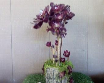 Purple Succulent Plants Tree