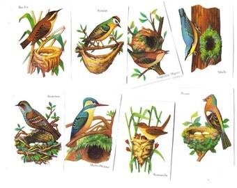 Vintage BIRDS Educational CROMOS from PARIS - Bird Species Old French School