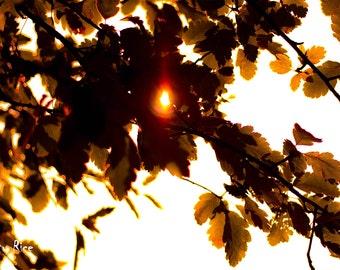 Sun Flare Trees Landscape Print Photo Contrast Dark 6x4 6 x 4 Park Woodland Atmospheric Bright Fall Autumn