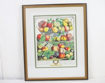 Fruit Print Hand Colored September 1732 Tiered Fruit Bowl Tiered Furber Gardiner