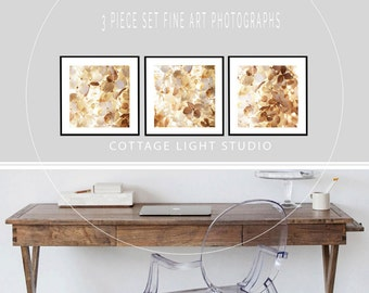 Art, Photography, 3 piece set, Hydrangeas, Soft Light, Wall Art, Photography by Cindy Taylor