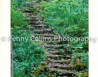 5x7 greeting card the path less taken