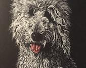 White on black pet portraits