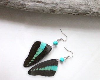 Black and Blue Butterfly Wing Earrings, Graphium Milon Swallowtail Butterfly