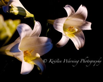 Lily, Lilies, Flower Pictures, Pictures of Flower, Easter, Flowers, Nature, Flower Gardens