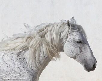 The White Stallion's Mane - Fine Art Horse Photograph - Horse - Lusitano - Fine Art Print