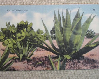 Vintage 1940's Post of Sotol and Prickly Pear Catus