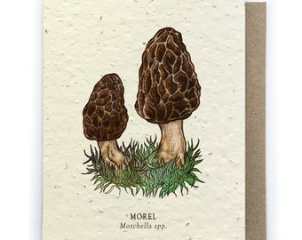 Morel Mushroom Greeting Card - Plantable Seed Paper - Blank Inside