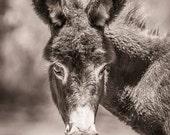 BABY DONKEY, cute donkey, kids decor, Donkey face