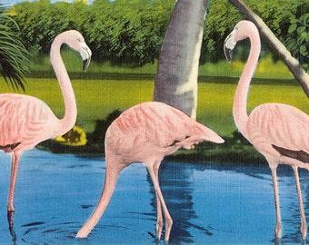 Pink Flamingos vintage illustration Digital Download