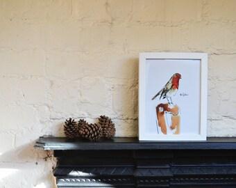 Framed Illustration print - robin