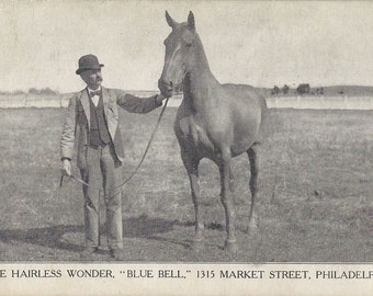 Famous Blue Bell - Antique 1900s Hairless Horse Photomechanical Advertising Postcards, Set of Three