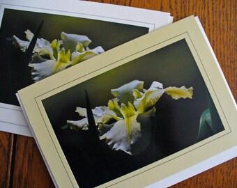 Flower Garden Serene Delicate Iris Birthday Card, Eco Friendly, All Occasion, Blank Greeting Card, Photo Card
