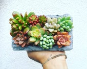 Concrete succulent arrangement with agate detail