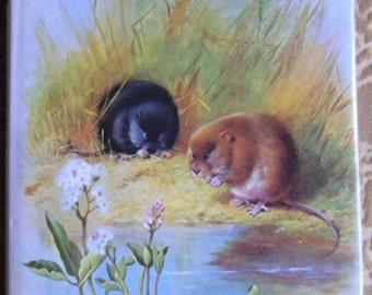 Vintage Nature Book - Thorburn's Wildlife, Jeremy Cardew, Text George Rainbird Limited, Windward 1979, Wildlife Book