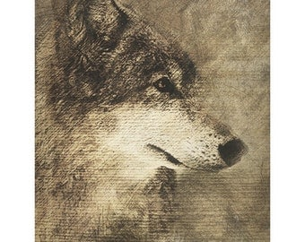 Timber Wolf digital Pencil Drawing on Stretched Canvas