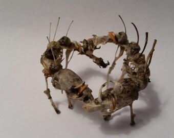 Real Animal Bone Sculpture, Baby Dragon Skeleton, Animal Specimen, Curiosity Cabinet, Halloween Bone Art, Macabre Taxidermy, Oddities, J & S
