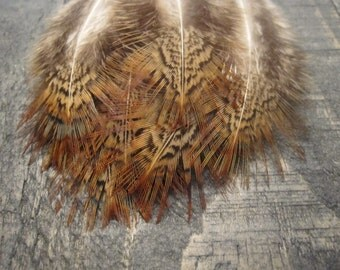 16 Rusty Orange Colored Ringneck Pheasant Feathers ~ Cruelty Free