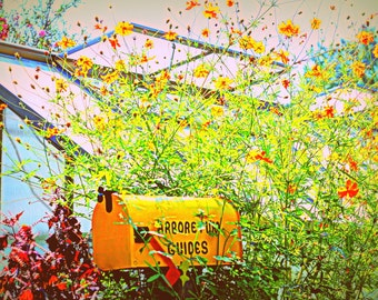 Garden Flowers and Greenhouse! Prints! Enhanced Photo.