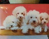 BRITISH TOFFEE TIN - Thornes of England - Candy Toffee Tin - Cuddly Poodles in a Row - Rosy Pink/White/Tan Graphics of Sweet Poodles