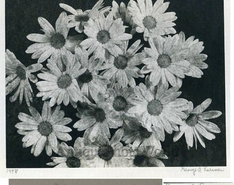 Daisies flowers vintage art photo by G. Eisenman