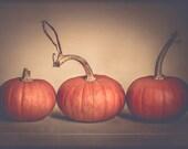 Pumpkin Photography - Autumn - Fall - Thanksgiving - Harvest - Orange - Cream - Fall Decore - Moderen Fall