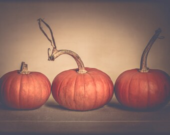 Pumpkin Photography - Autumn - Fall - Thanksgiving - Harvest - Orange - Cream - Fall Decore - Moderen Fall