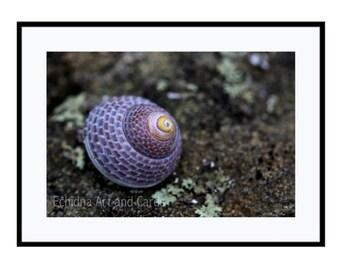 12x16 Seashell Print, Coastal Wall Art, Large Nature Photography, Purple Home Decor