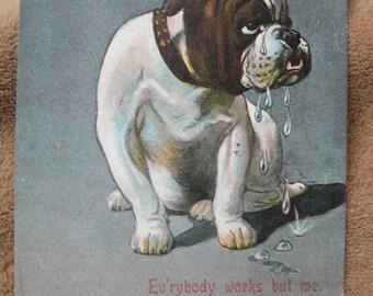 English Bulldog Vintage postcard