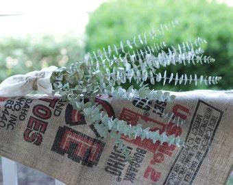 Baby Blue Eucalyptus Bunch- 8-10 stem bunch
