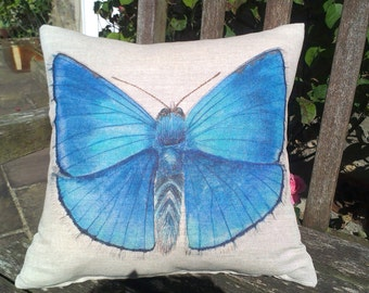 Adonis Blue Butterfly Cushion