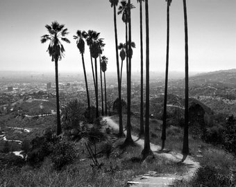 Hiking in Paradise - Los Angeles - California - Palm Trees - Landscape Photography - Cityscape - Black and White - Fine Art - Large Format