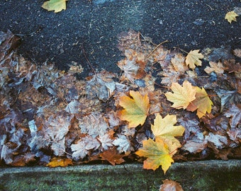 Fall Leaves, Color Print, Large Wall Art, Seasonal, Photography, Frost, Ice, FREE SHIPPING