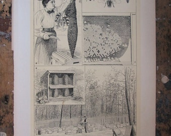 Bees and Bee Culture and Wild Bees Lithographs from the 1905 International Encyclopaedia