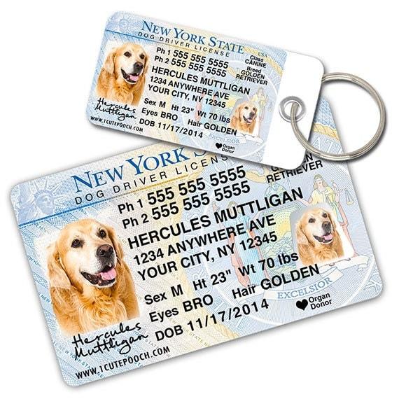 Get Dog License In New York