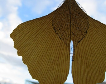 Want the best with these three angels on ginkgo leaves and vegetable lace