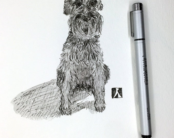 KillerBeeMoto:  Original Sketch of Standard Schnauzer Pen and Ink