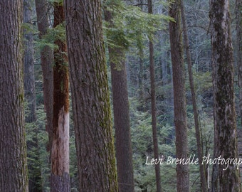 Tranquil forest Landscape print by Levi Brendle