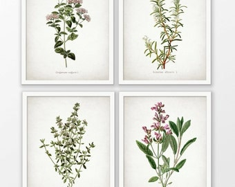 Herb Art Print Set of 4 - Oregano - Rosemary - Sage - Thyme - Kitchen Art - Kitchen Herbs - Set Of Four Prints #1640 - INSTANT DOWNLOAD