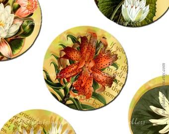 Digital Collage Sheet  Water Lily and Chrysanthemum 1 inch round original images Scrapbooking Pendants Printable 4x6 inch sheet  266