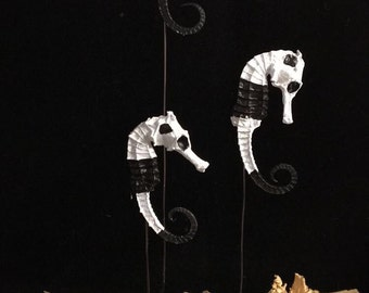 Real Seahorse Collection Series