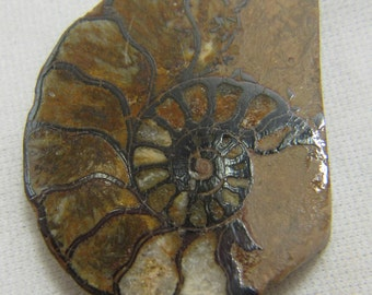 Fossil Ammonite, Ammonite Cabochon, Ammonite Jewelry, Fossil Jewelry, Fossil Cabochon, Protection, Prosperity, Wire Wrap, Good Luck,   #863